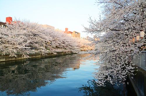 花見 大横川